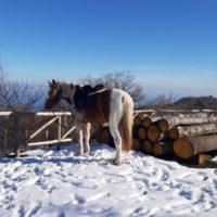 tour-cavallo7